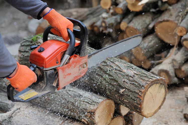 thumbnail of How Can You Find the Best Chain Saw Around?
