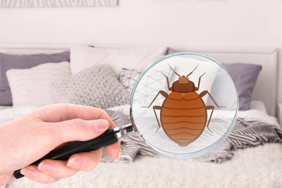 thumbnail of Don't Let Bed Bugs Ruin Another Nights Sleep
