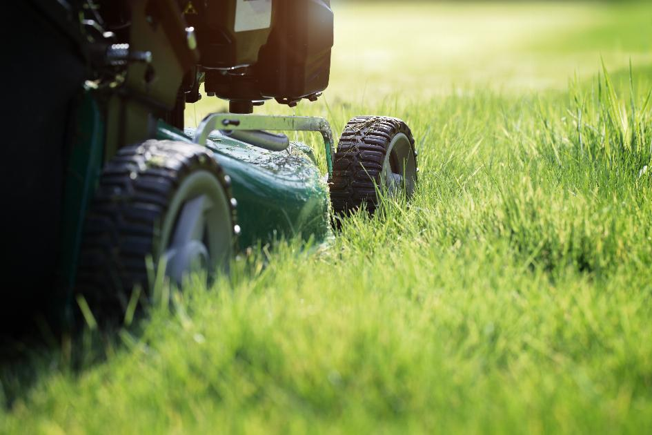 thumbnail of Where Can You Find the Best Lawn Mowers?