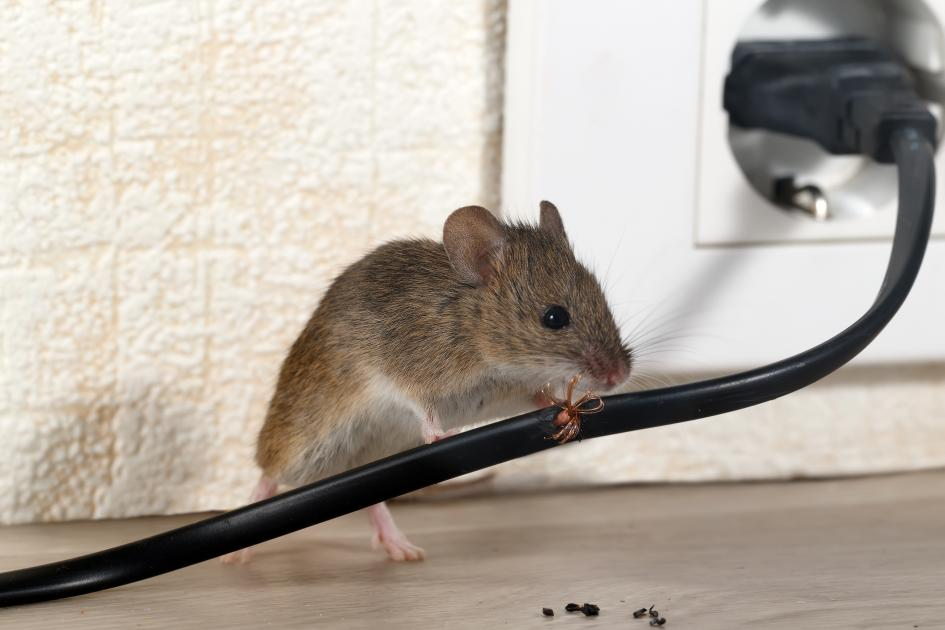 thumbnail of Pests Can Turn a Home From Sanctuary To Nightmare
