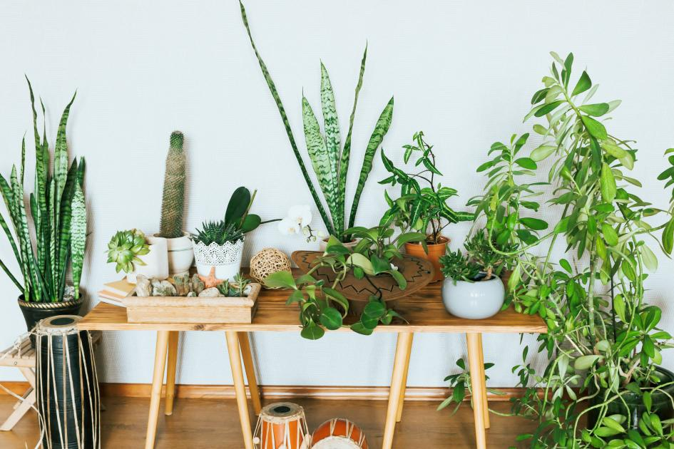 banner-1 of The Right Indoor Plant Will Complete Your Home