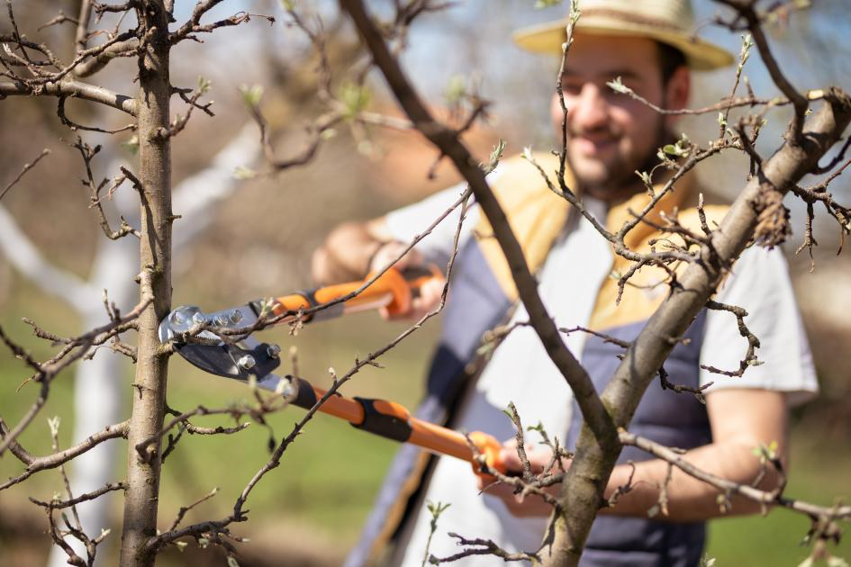 thumbnail of Some Simple Tree Pruning Can Improve the Look of Your Yard
